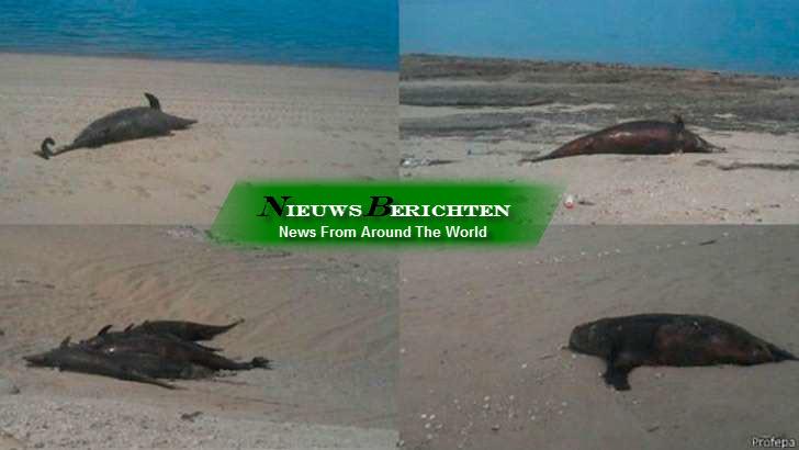 55 dolfijnen en 4 zeeleeuwen dood gevonden in Baja California. Onbekende doodsoorzaak